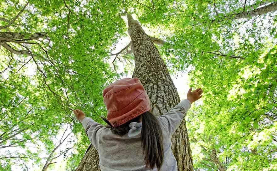 木の上を見上げる女の子