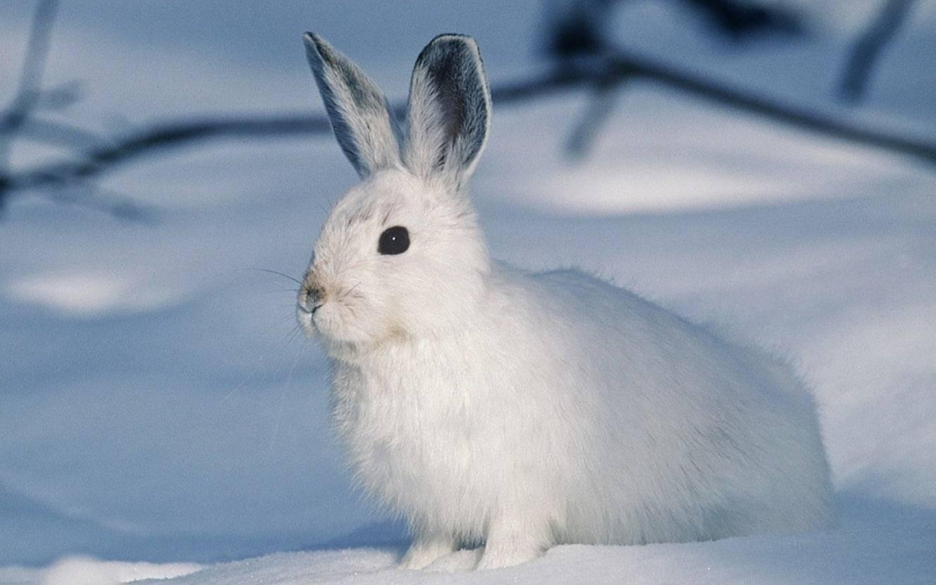 冬の樽ヶ橋遊園で動物たちと雪遊び